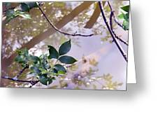 Leaves With Reflection Greeting Card