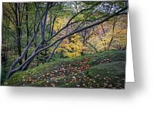 Ledges Overlook Trail 6 Greeting Card
