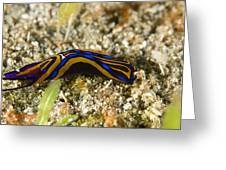 Leech Headshield Slug Greeting Card