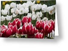 Leen Van Der Mark Tulips Greeting Card