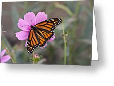 Legend Of The Butterfly - Monarch Butterfly - Casper Wyoming Greeting Card