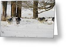 Legends Of The Lamar Valley Greeting Card