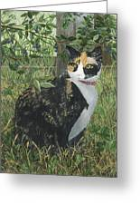 Leia Cat In Blueberries Greeting Card
