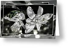 Lemon Blossoms Greeting Card