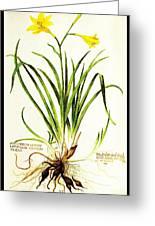 Lemon Daylily Botanical Greeting Card