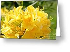 Lemon Drop Azalea Greeting Card