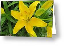 Lemon Lily Greeting Card