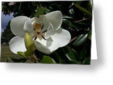 Lemon Magnolia Greeting Card