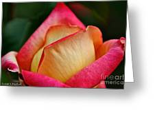 Lemon Raspberry Rosebud Greeting Card