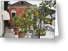 Lemon Trees On A Villa Terrace Greeting Card by George Oze