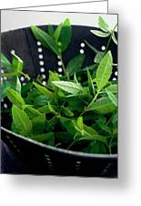 Lemon Verbena Herbs Greeting Card