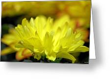 Lemon Whispers Greeting Card