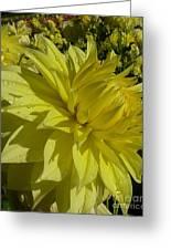 Lemon Yellow Dahlia  Greeting Card