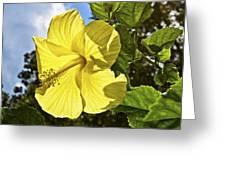 Lemon Yellow Hibiscus Greeting Card