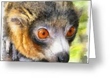 Lemur 004 Greeting Card