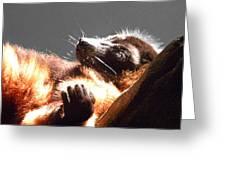 Lemur Lounging Greeting Card