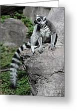 Lemur Pose Greeting Card