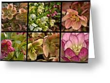 Lenten Rose Collage Greeting Card