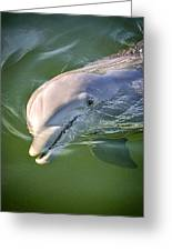 Dolphin Greeting Card