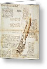 Leonardo: Anatomy, 1510 Greeting Card
