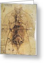 Leonardo: Anatomy, C1510 Greeting Card
