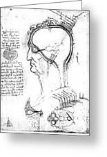 Leonardo: Brain, C1490 Greeting Card