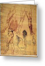 Leonardo: Legs, C1508 Greeting Card
