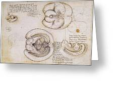 Leonardo: Ventricles, C1508 Greeting Card