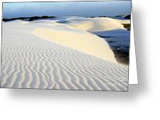 Leoncois Maranhenses Beauty Of Sand Greeting Card