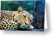 Leopard 1 Greeting Card