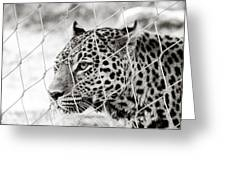 Leopard Black And White Photography Greeting Card