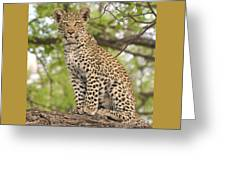 Leopard Cub Gaze Greeting Card