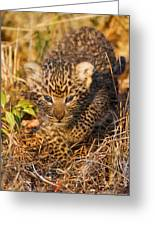 Leopard Cub Greeting Card