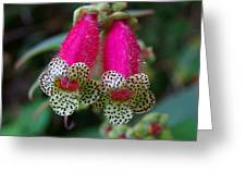 Leopard Flower - K. Digitaliflora Greeting Card