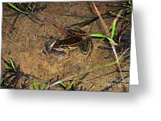 Leopard Frog Greeting Card