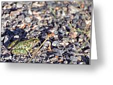 Leopard Frog And Gravel Greeting Card