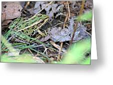 Leopard Frog And Leaf Litter Greeting Card