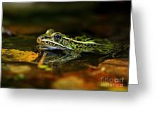 Leopard Frog Floating On Autumn Leaves Greeting Card