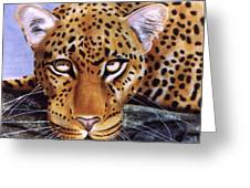 Leopard In A Tree Greeting Card