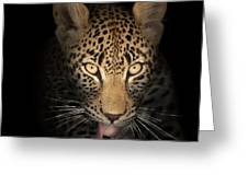 Leopard In The Dark Greeting Card by Johan Swanepoel