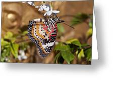 Leopard Lacewing Butterfly Dthu619 Greeting Card by Gerry Gantt