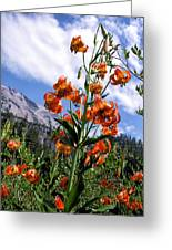 Leopard Lilies Below Lassen Peak Greeting Card