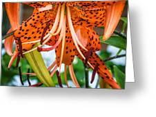 Leopard Lily 2 Greeting Card
