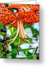 Leopard Lily Greeting Card