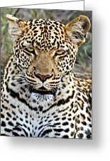 Wild Leopard In Botswana Greeting Card