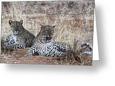Leopard Mates Greeting Card