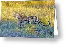 Leopard On The Prowl Greeting Card