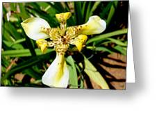 Leopard Orchid Greeting Card