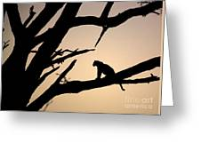 Leopard Sitting In A Tree Greeting Card