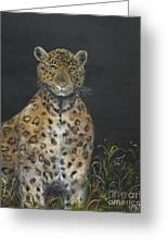 Leopard Stare Greeting Card